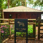 Tiger Lodge – Kent Port Lympne Hotel & Reserve